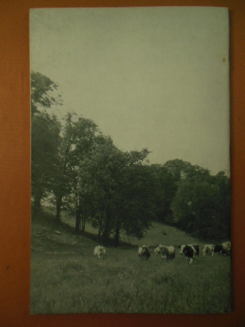 Image for Dairying at the Ohio Agricultural Experiment Station (1930)