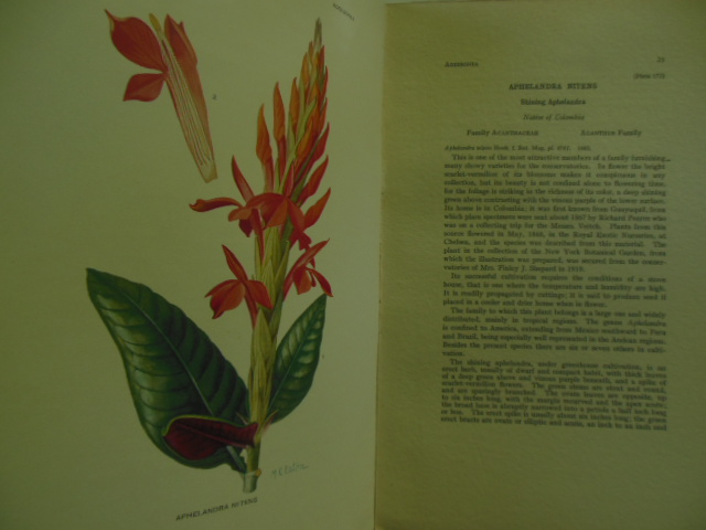 Image for Addisonia; Publication of the New York Botanical Garden 1920