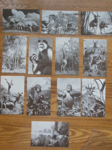 Image for Postcards Animals American Museum of Natural History (Akeley African Hall 12 cards)